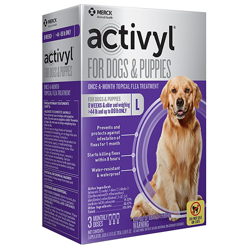 130292349860228000activyl-for-large-dogs-purple.jpg