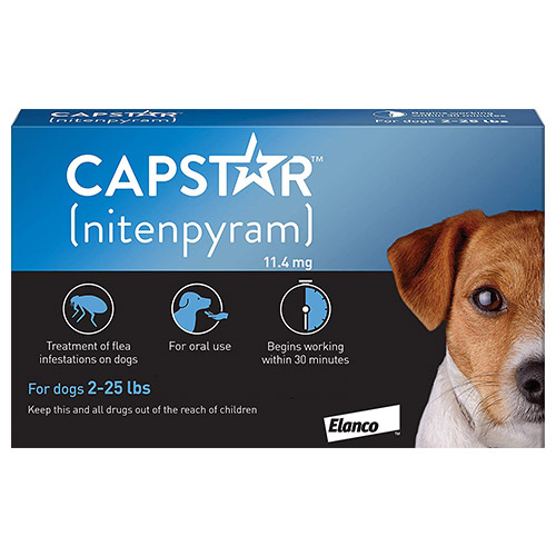 637253651342318406-capstar-dog-blue.jpg
