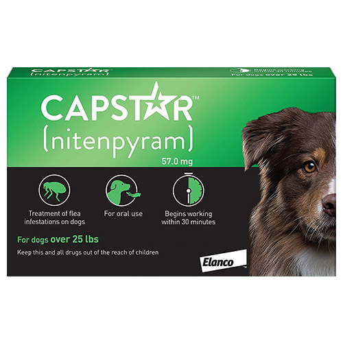 637253651464668166-capstar-dog-green.jpg