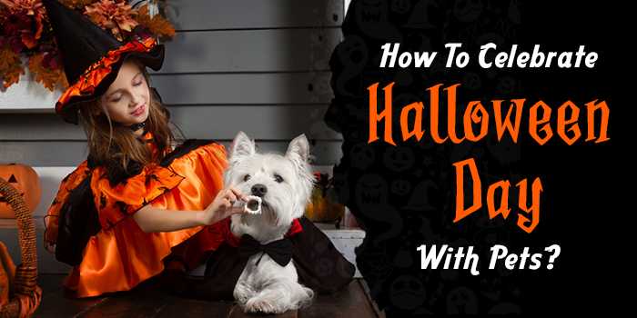 How To Celebrate A Safe Halloween With Your Pets?