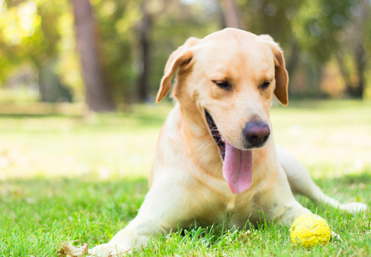 Easy Tips for Training Your Dogs