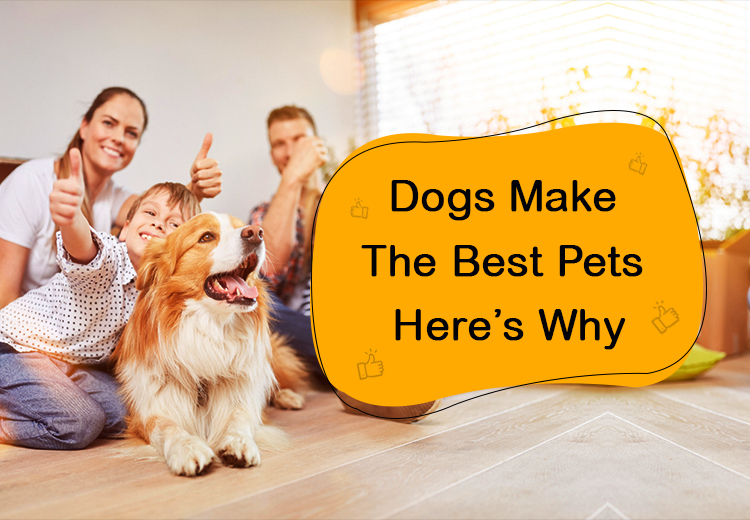 Dogs Make The Best Pets Here's Why