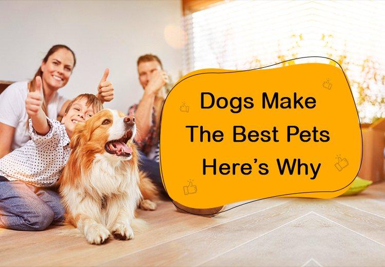 OPW-Dog-Best_11302020_003405.jpg