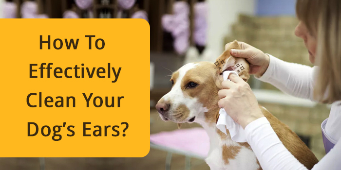 How To Effectively Clean Your Dog Ears?