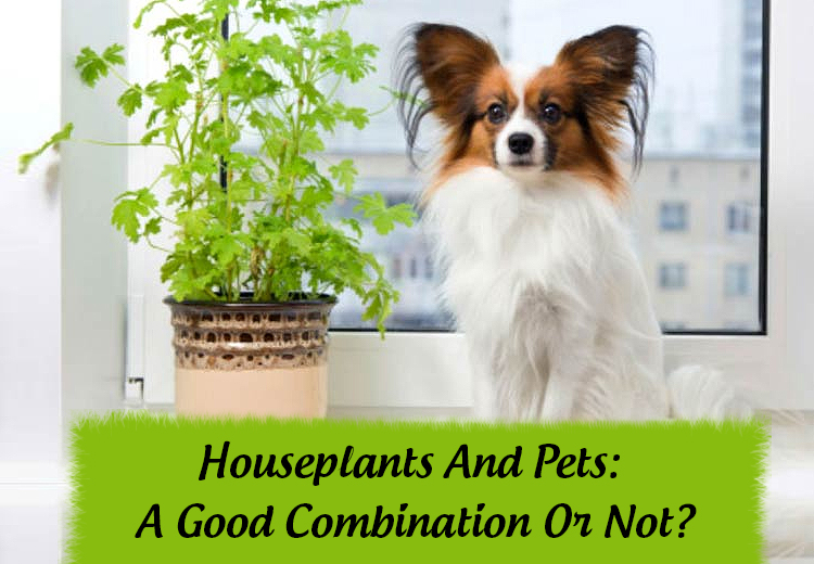 Houseplants And Pets - A Good Combination Or Not ?