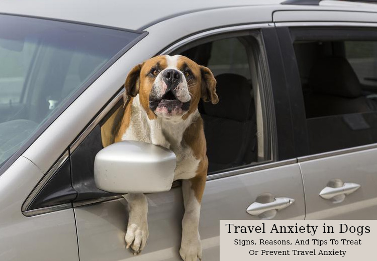 Travel Anxiety in Dogs – Signs, Reasons, And Tips To Treat Or Prevent Travel Anxiety