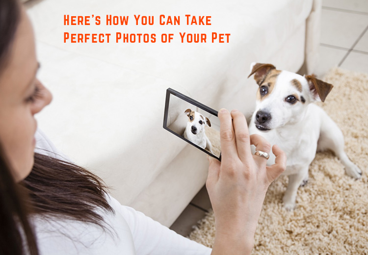 Its National Dog Photography Day 2020 - Here's How You Can Take Perfect Photos of Your Pet