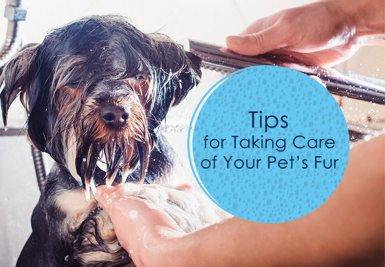 Tips for Taking Care of Your Pets Fur